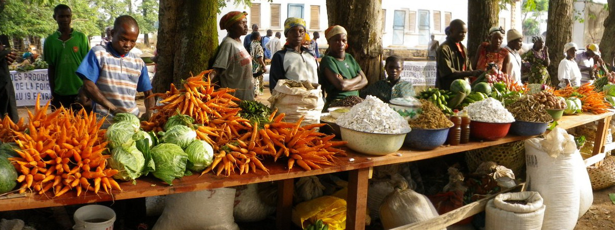 Vegetables Give Livelihood