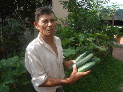 Don Secundino is a grower who likes to share his deep knowledge of gardening with other families - Photo courtesy of Mennonite Social Action Committee, Honduras