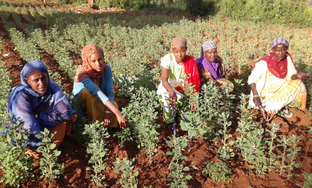 Women with quinoa plants, GrowEastAfrica
