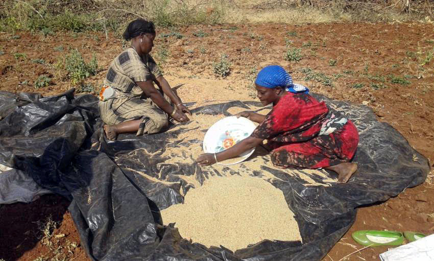 Mega area IDP women selling teff at market