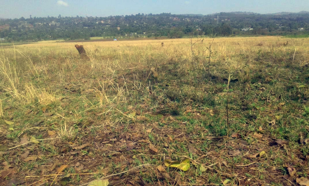 GrowEastAfrica's new garden plot