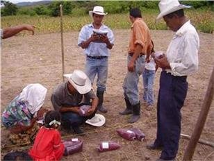 Participatory Farmer Research in Honduras