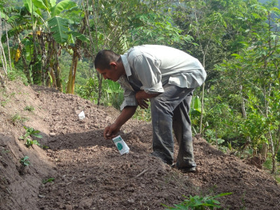 Terraced garden beds - Photo courtesy of Mennonite Social Action Committee, Honduras